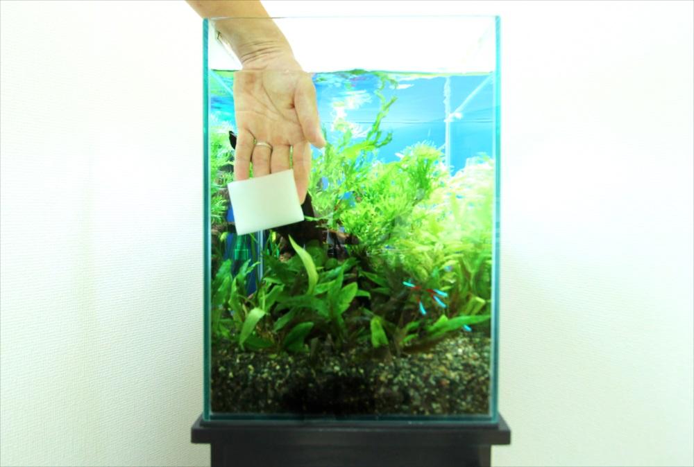 個人宅 30cm淡水魚水槽 メンテナンス画像