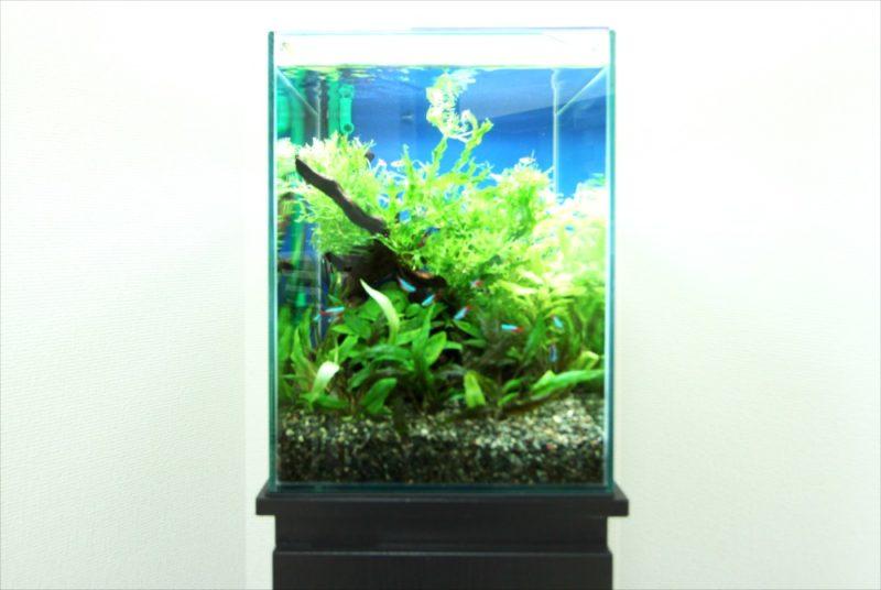 お試しから本契約へ 個人宅 30cm淡水魚水槽事例 水槽画像2