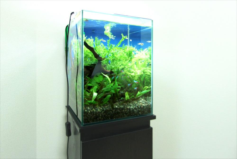 個人宅 30cm淡水魚水槽 水槽画像