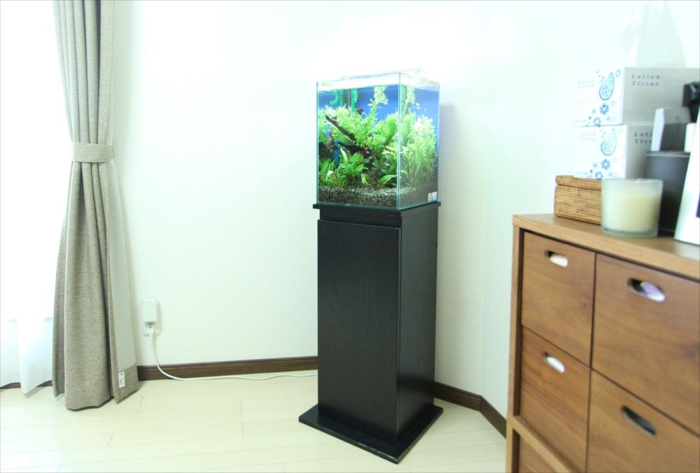 お試しから本契約へ 個人宅 30cm淡水魚水槽レンタル事例 メイン画像