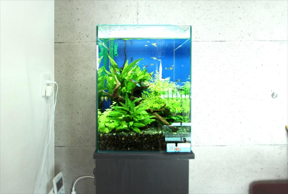 個人宅 お試し30cm淡水魚水槽 アップ画像