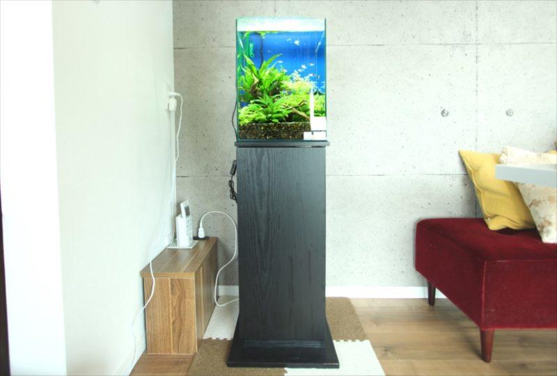 2週間無料お試しキャンペーン! 30cm淡水魚水槽を設置 水槽画像1
