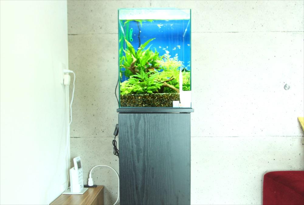 個人宅 お試し30cm淡水魚水槽 アップ斜め画像