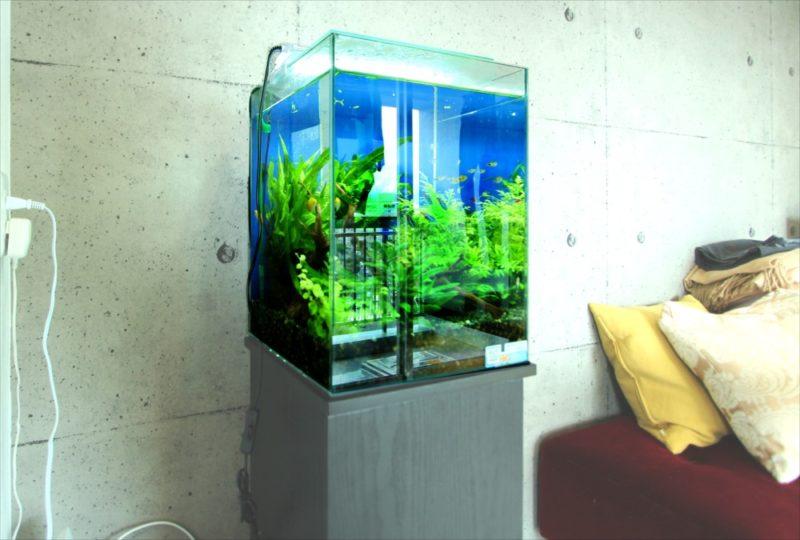 2週間無料お試しキャンペーン! 30cm淡水魚水槽を設置 水槽画像2
