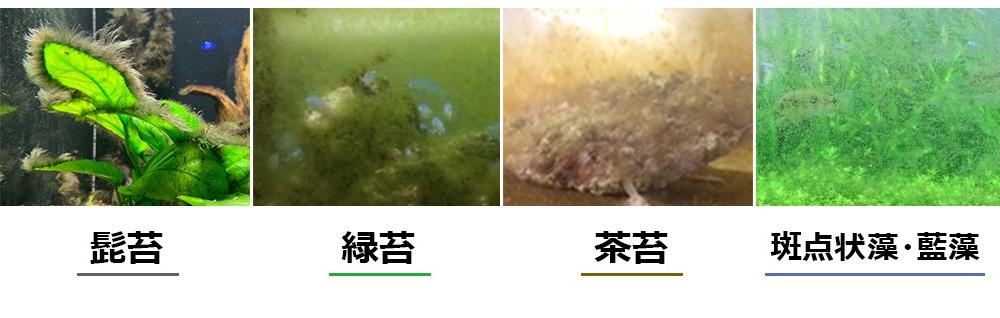 東京アクアガーデンのコケ対策!コケの種類