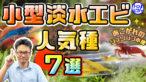 YouTube更新「憧れのシュリンプ水槽!人気の小型淡水エビ7選!繁殖も狙えます」