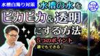 """YouTube更新「【ピカピカの水】水槽の水を""""超透明""""に!誰でもできる5つのポイント」"""