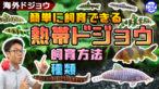 YouTube更新「海外のドジョウを飼ってみよう!簡単に飼育できる熱帯ドジョウたちをご紹介!」