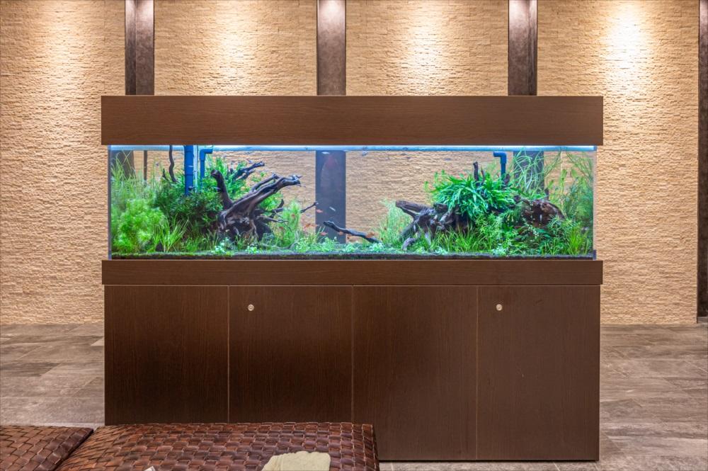 マンションのエントランス 180cm淡水魚水槽 正面画像