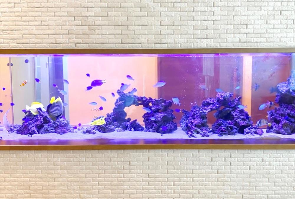 整形外科 壁埋め込み型 海水魚水槽 正面画像