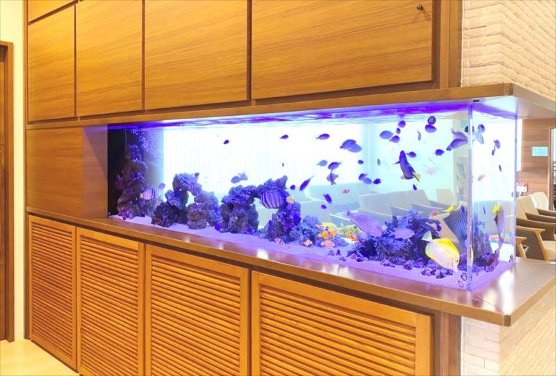 整形外科クリニック 壁埋め込み型海水魚水槽 販売・メンテナンス事例 その後 水槽画像1