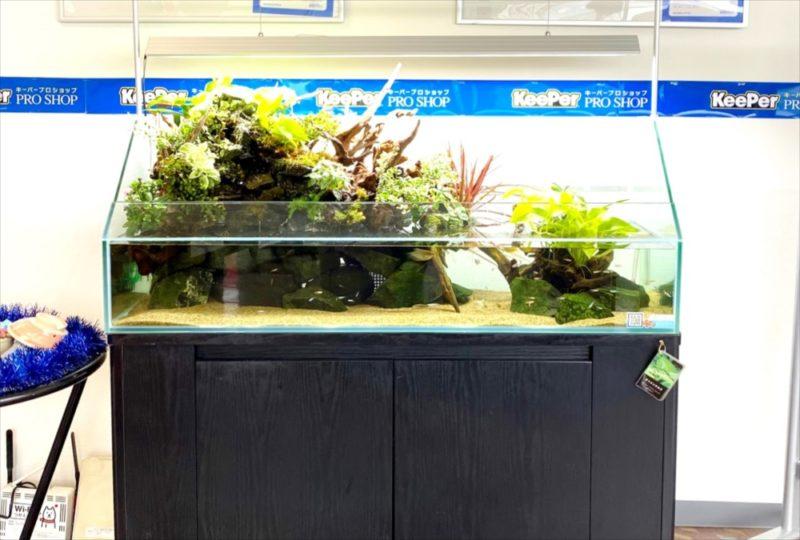 店舗 120cmアクアテラリウム水槽 レンタル事例  水槽画像2