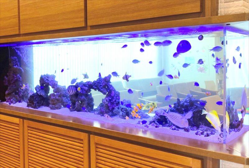 整形外科クリニック 壁埋め込み型海水魚水槽 販売・メンテナンス事例 その後 水槽画像3