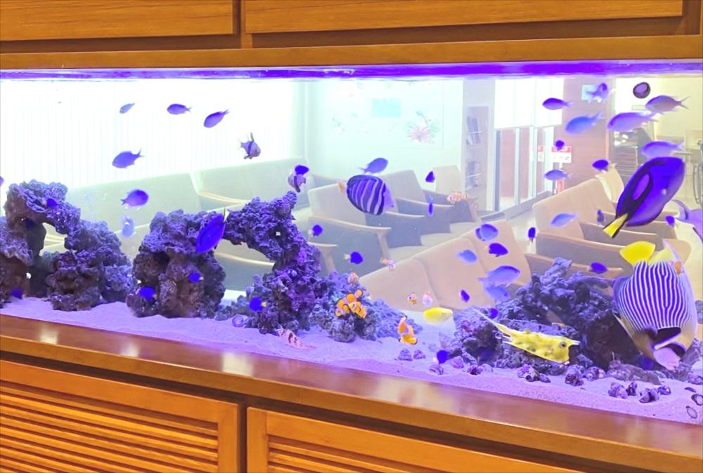 整形外科 壁埋め込み型 海水魚水槽 生体画像