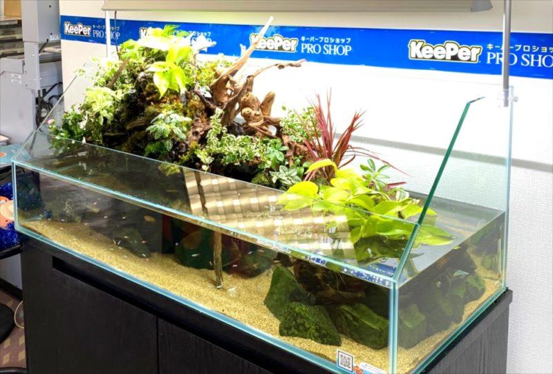 店舗 120cmアクアテラリウム水槽 レンタル事例  水槽画像5