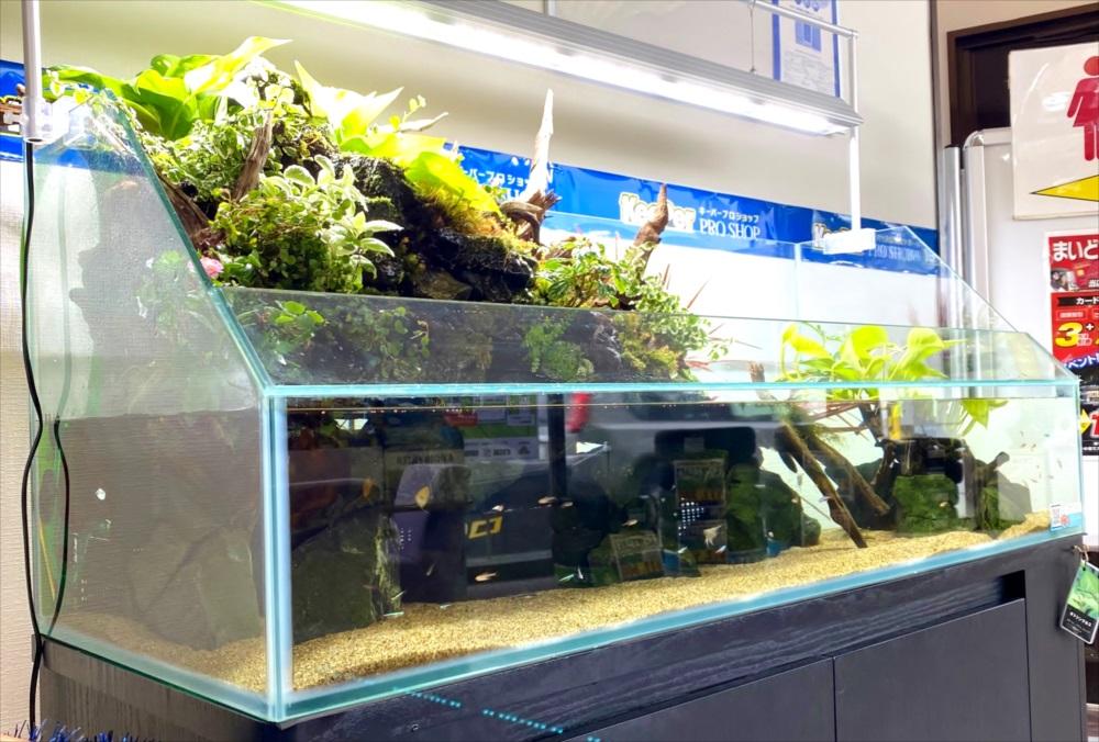 店舗 120cmアクアテラリウム水槽 斜めアップ画像