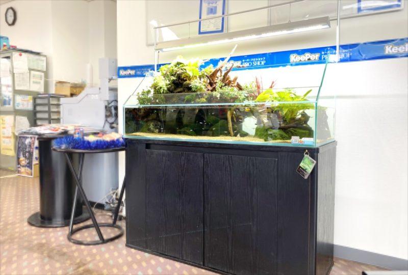 店舗 120cmアクアテラリウム水槽 レンタル事例  水槽画像1