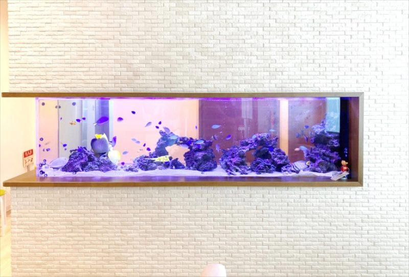 整形外科クリニック 壁埋め込み型海水魚水槽 販売・メンテナンス事例 その後 水槽画像4