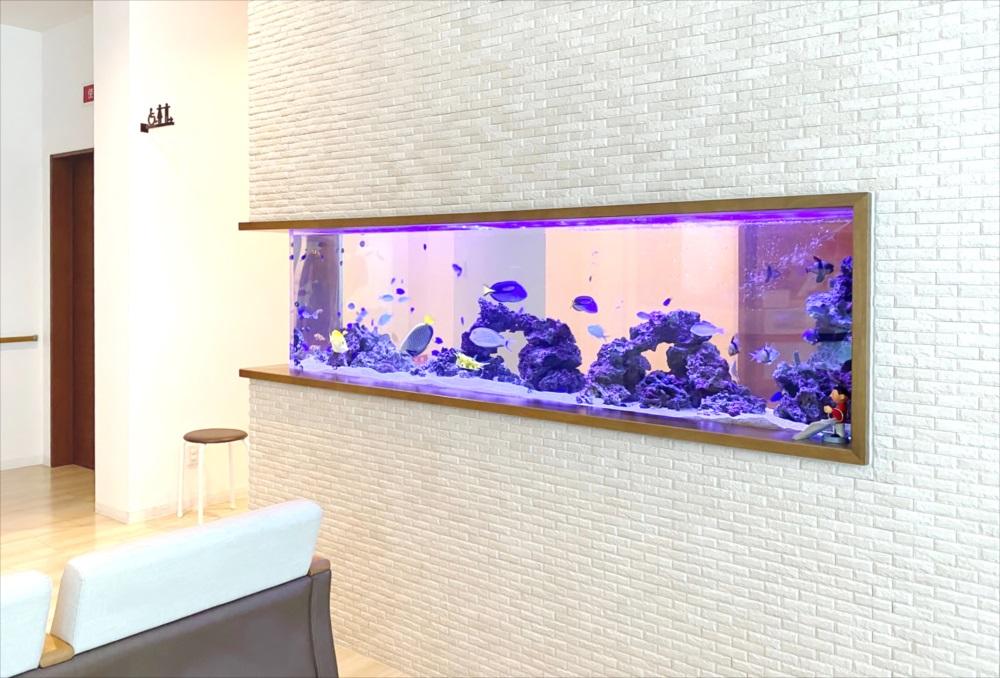 整形外科 壁埋め込み型 海水魚水槽 全体画像