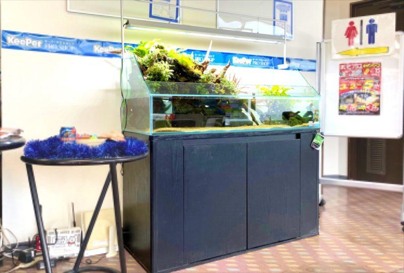 店舗 120cmアクアテラリウム水槽 レンタル事例  水槽画像3