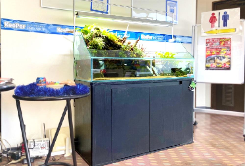 店舗 120cmアクアテラリウム 水槽斜め画像