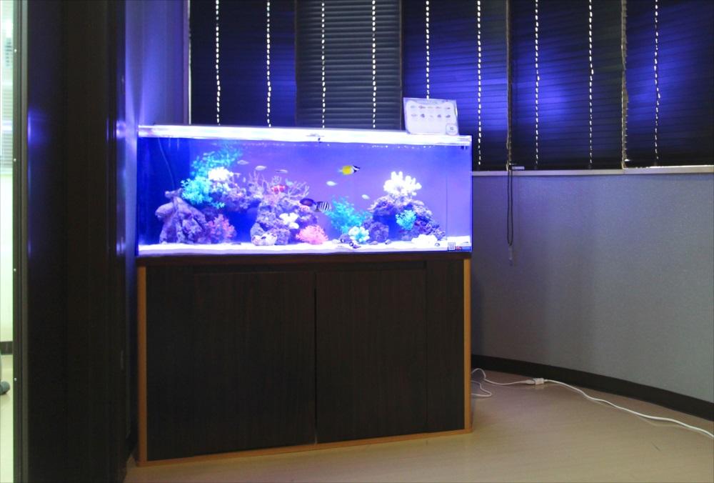 さいたま市 オフィスに120cm海水魚水槽を設置 メイン画像
