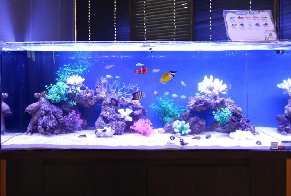 120cm海水魚水槽 オフィスに設置 生体画像