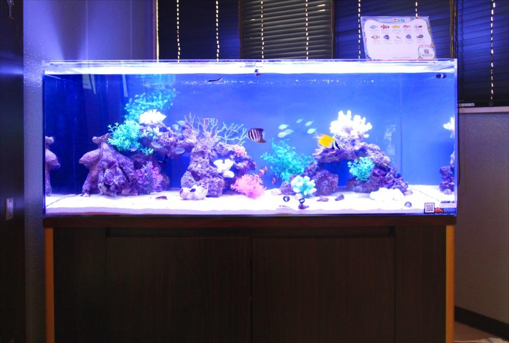 120cm海水魚水槽 オフィスに設置 全体画像