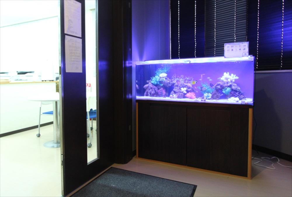 120cm海水魚水槽 オフィスに設置 全体斜め画像