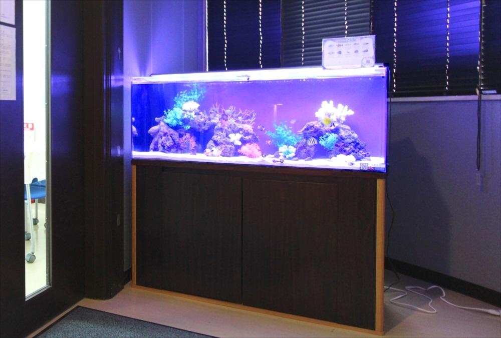 120cm海水魚水槽 オフィスに設置 斜め画像