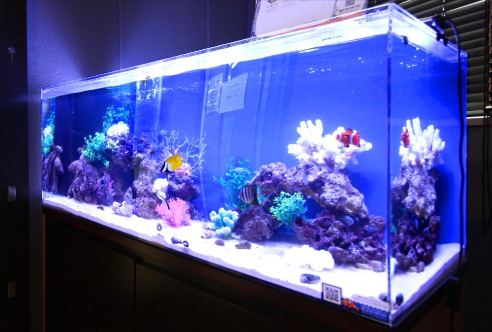 120cm海水魚水槽 オフィスに設置 斜めアップ画像