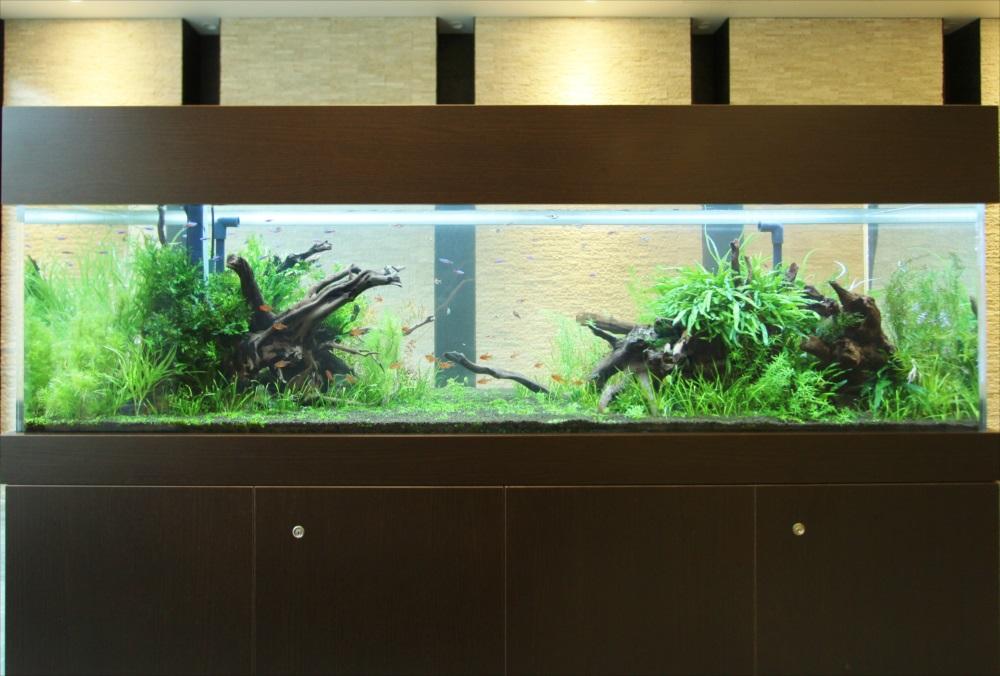 マンションのエントランス 180cm淡水魚水槽 水槽アップ画像