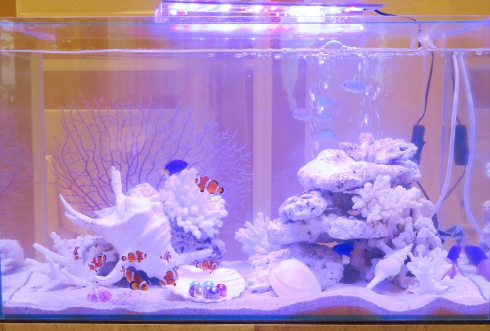 アクアリウムウェディング 60cm海水魚水槽 アップ画像