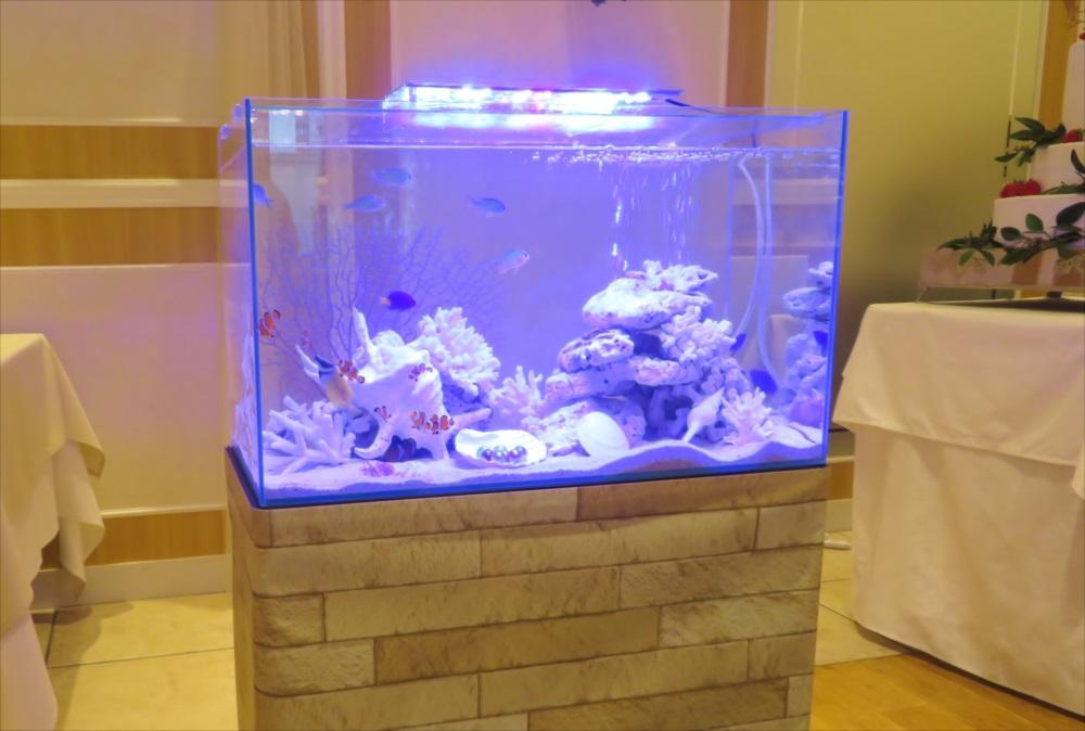 アクアリウムウェディング 60cm海水魚水槽 斜め横画像