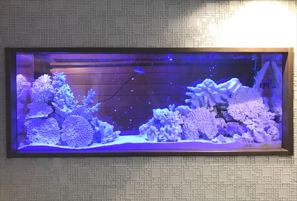 150cm淡水魚水槽 スポットメンテナンス前 水槽画像