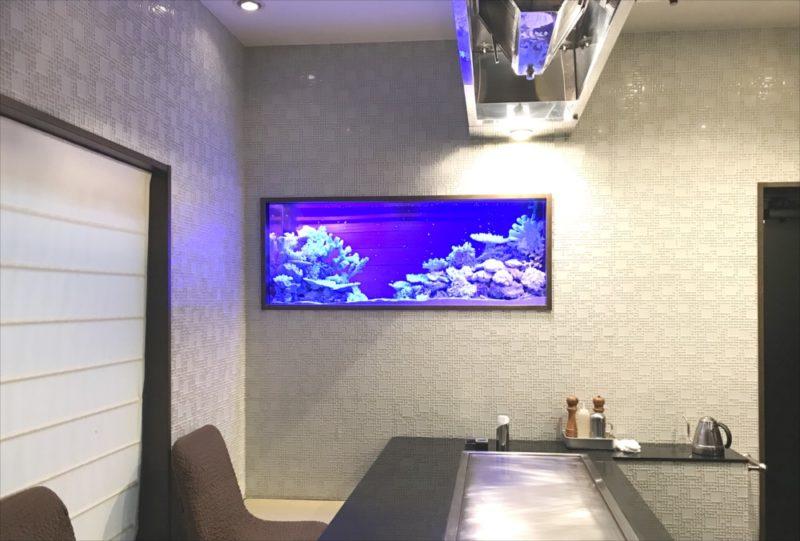 飲食店のシクリッド水槽をスポットメンテナンス 水槽画像1