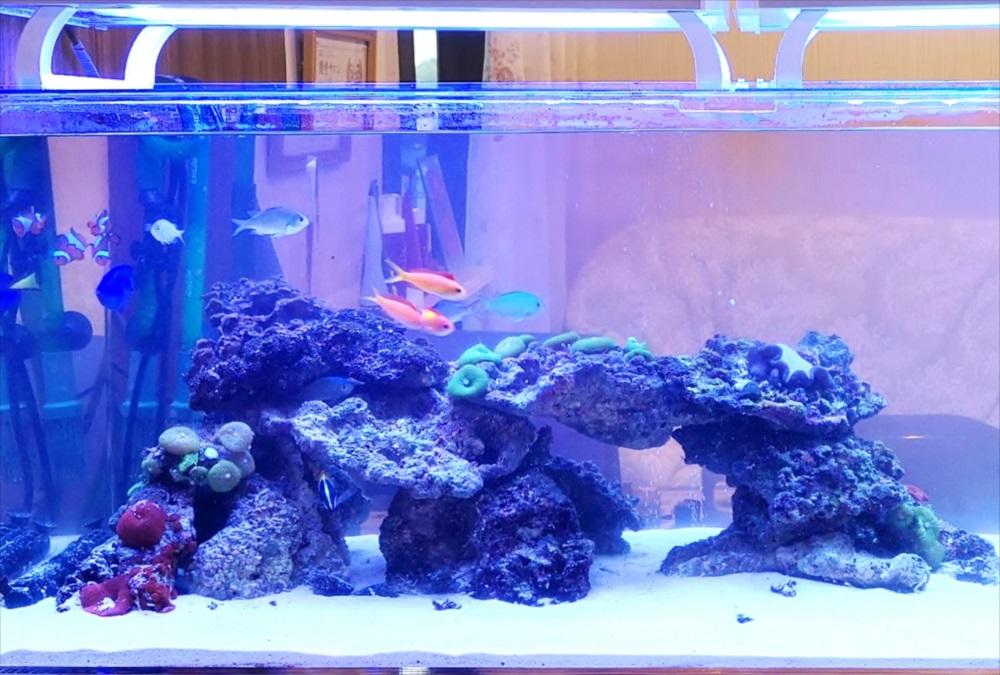 美容サロン 120cm海水魚水槽 サンゴ画像