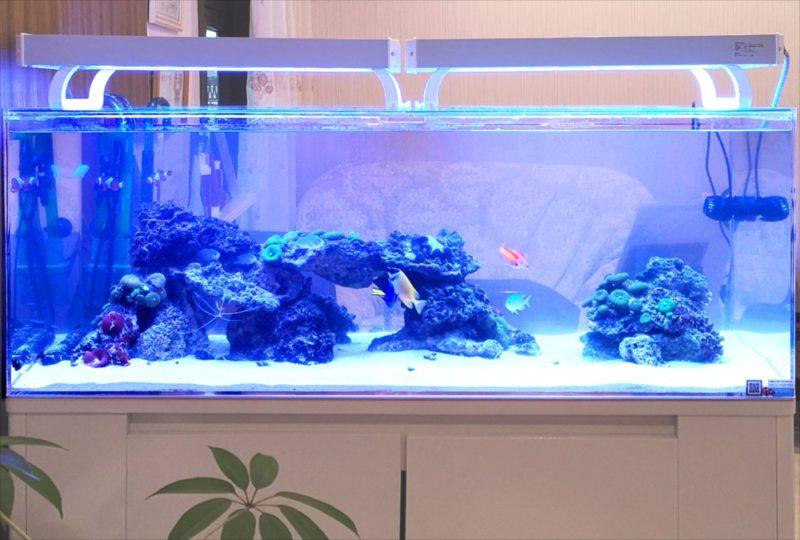 立川市 美容サロンに設置 120cmサンゴ水槽リース事例 水槽画像2