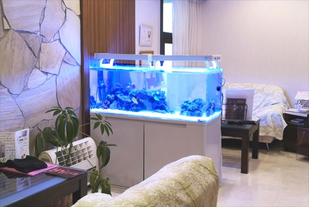 美容サロン 120cm海水魚水槽 水槽全体画像