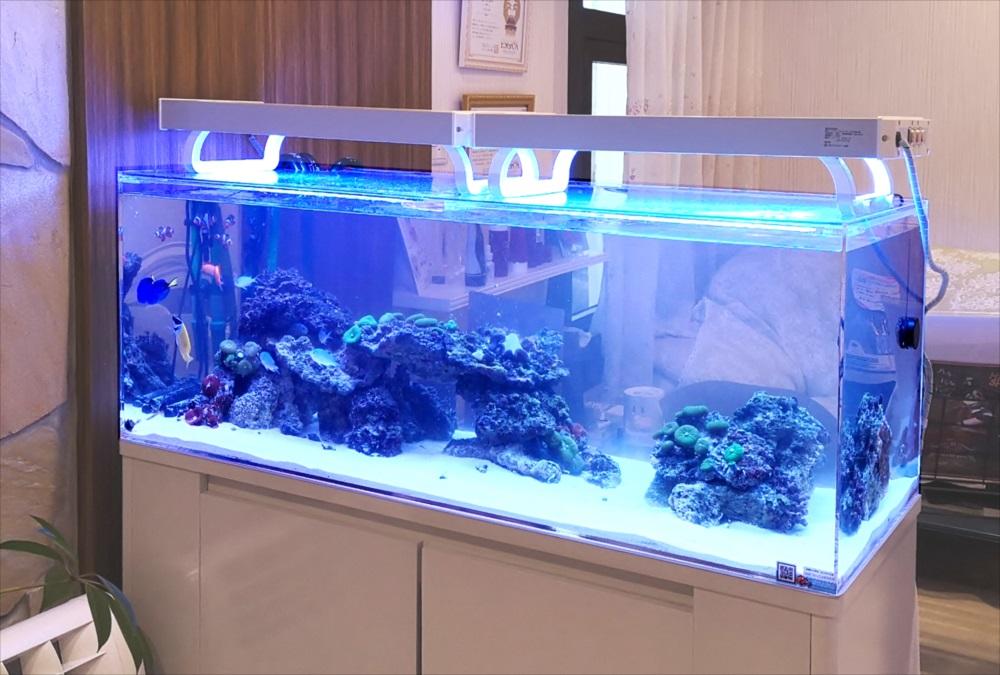 美容サロン 120cm海水魚水槽 水槽斜め画像