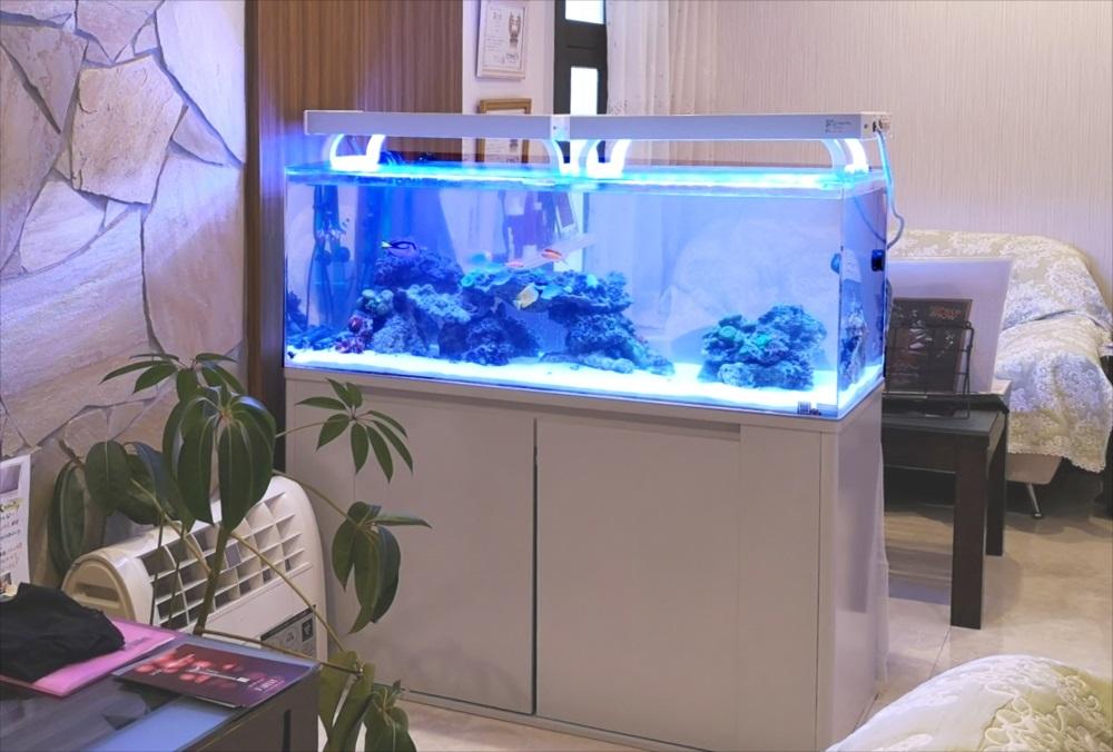 立川市 美容サロンに設置 120cmサンゴ水槽リース事例 メイン画像