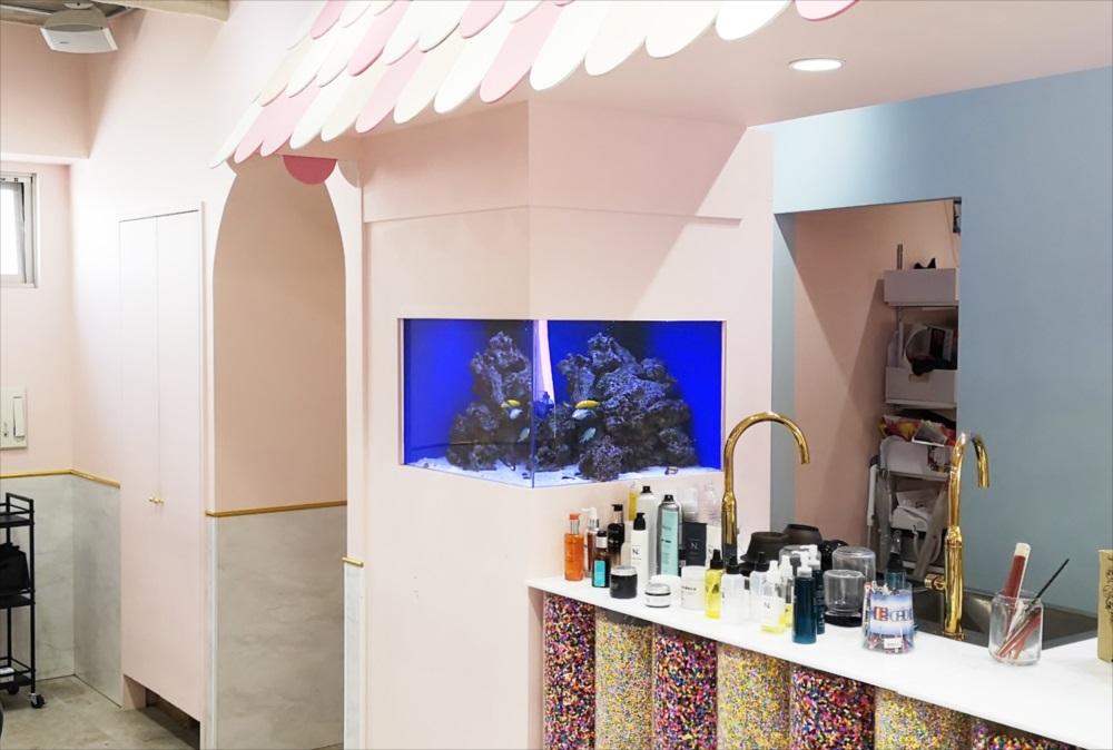 美容室 壁埋め込み型60cm海水魚水槽 その後