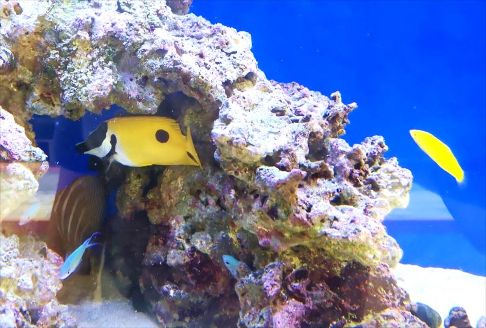 美容室 壁埋め込み型 海水魚画像