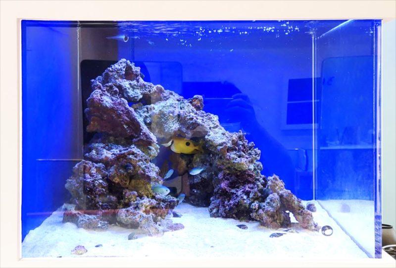 美容室 壁埋め込み型60cm海水魚水槽 販売・メンテナンス事例  その後 水槽画像4