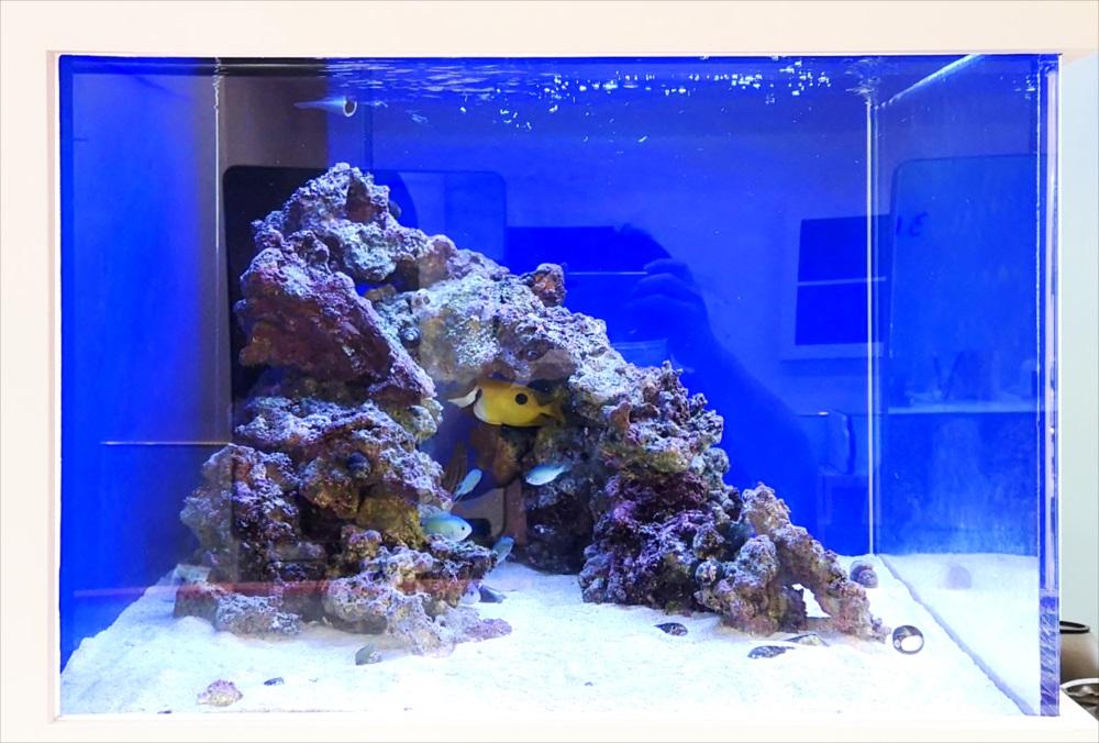 美容室 壁埋め込み型60cm海水魚 水槽アップ画像