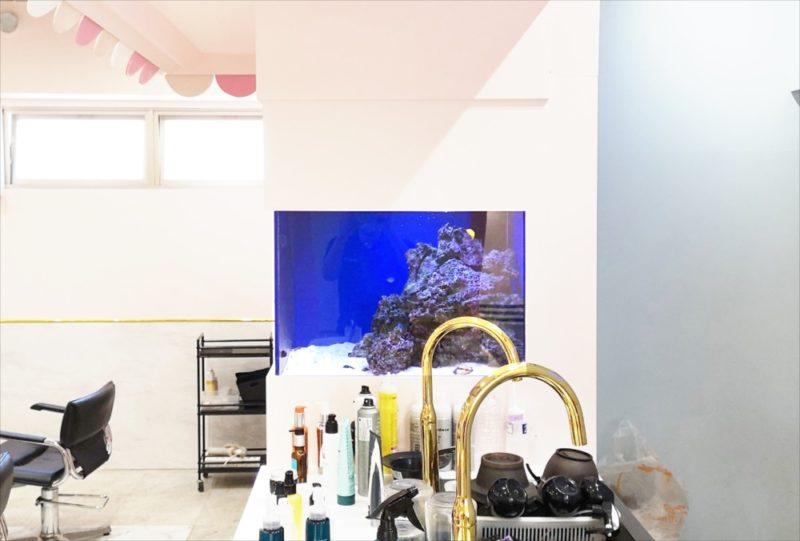 美容室 壁埋め込み型60cm海水魚水槽 販売・メンテナンス事例  その後 水槽画像3