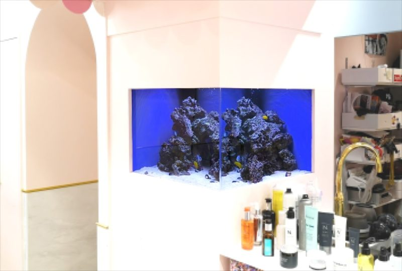 美容室 壁埋め込み型60cm海水魚水槽 販売・メンテナンス事例  その後 水槽画像2