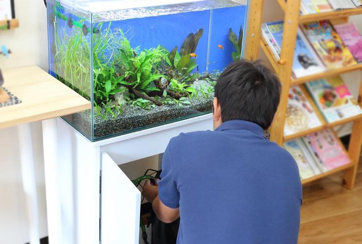 東京アクアガーデンの水槽リースサービスの設置作業