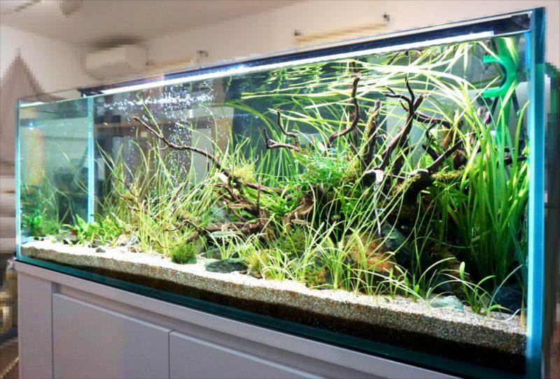 個人宅 リビング 120cm淡水魚水槽 設置事例 水槽画像1
