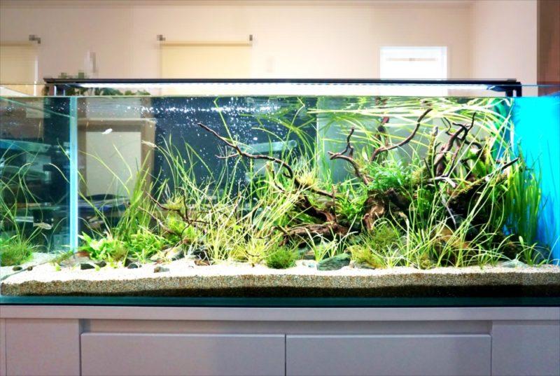 個人宅 リビング 120cm淡水魚水槽 設置事例 水槽画像2